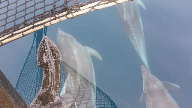 Dolphin, Dolphin, Dolphin.